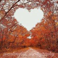Осень :: Anton Glas