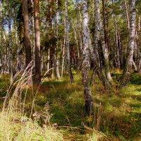 """Из серии """" В лесу """". :: Мила Бовкун"""