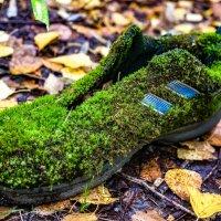 Леший кроссовок потерял. :: Николай С
