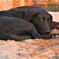 Жизнь собачья :: Ветер Странствий.орг
