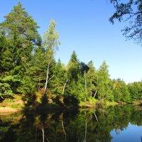 Лесные берега :: Андрей Снегерёв