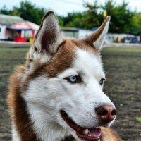 Выставка собак :: Натали