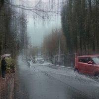 дождь :: михаил