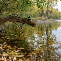Краски осени :: Валерий Михмель