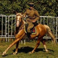 Мы с конём гарцуем :: Павел