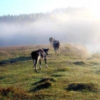 Рабочее утро :: Владимир Гатажаков