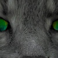 кошачий взгляд :: Евгений Евгений