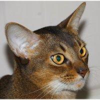 Кошек не любит только тот, кто еще не встретил свою кошку..... :: Tatiana Markova