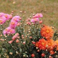 Отцвели уж давно хризантемы в саду. :: Венера Чуйкова