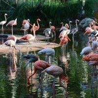 Фламинго :: Евгений Васильев
