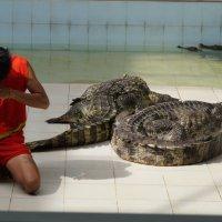 с крокодилами :: Елена Елена