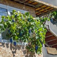 Виноградное окошко :: Варвара