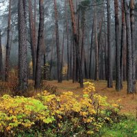 Промокший лес и пуст и странен... :: Лесо-Вед (Баранов)