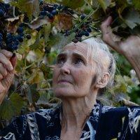 осень виноградною лозой ,заплетала годы  .... :: Лиана Краснопольская .