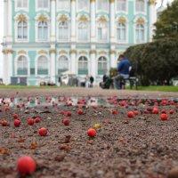 яблочки :: Андрей Иванов