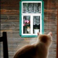 Наши окна друг на друга смотрят вечером и днём :: Николай Масляев