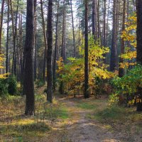 Лесного ожидая листопада... :: Лесо-Вед (Баранов)