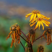 Осенние цветы. :: Виктор Шпаков
