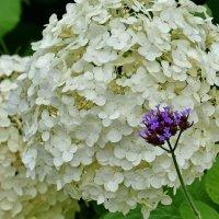 Маленький синий цветочек :: Ирина Ярцева