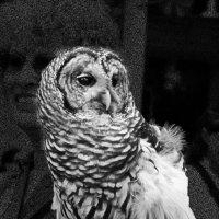 Контраст в черно-белом снимке :: Яков Геллер