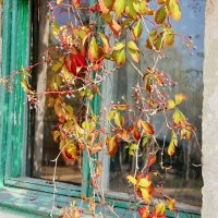 Осень стучится в окно. :: Лариса Исаева
