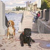 Прогулки по Петербургу. Фонтанка :: Тата Казакова