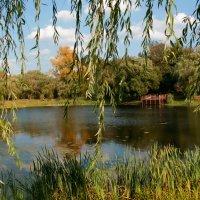 В наряде ивовой вуали...сияет Осень красотой :: Vera Ostroumova