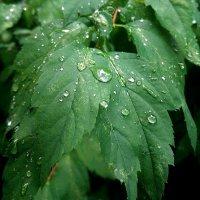 Дожди зарядили... :: Ирина Via