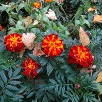 Осенние бабочки. :: Елизавета Успенская