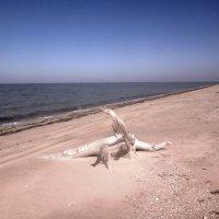 На песке, фигура от Природы :: Сергей Анатольевич