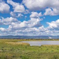 Заливные луга, Приморье :: Эдуард Куклин