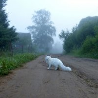 Утро в деревне :: Елена Грошева