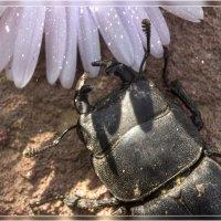 Бронерованный жук :: Анастасия Сосновская
