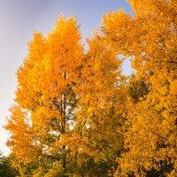 Краса Осени1 :: Андрей Гриничев