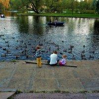 На вечернем пруду... :: Sergey Gordoff