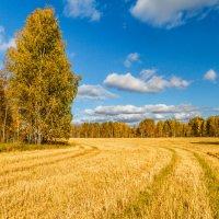 Тюменский осенний пейзаж :: Георгий Кулаковский