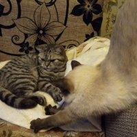 Кошечки мои :: BoxerMak Mak