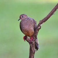 портрет птицы :: Anatoliy Kyselyov