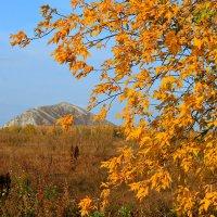 На землю желтый лист спадает за листом ... :: Евгений Юрков