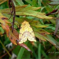 Бабочки :: Liudmila LLF