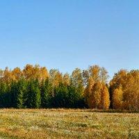 золотая осень :: Николай Мальцев