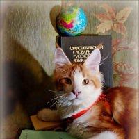 Кот учёный. Портрет :: Кай-8 (Ярослав) Забелин