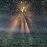 туман и солнце :: юрий иванов