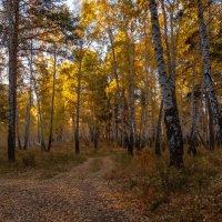 Утро в лесу :: Sergey Sapozhnikov
