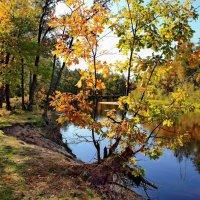 Гордится осень золотом листвы... :: Лесо-Вед (Баранов)