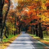 осень :: AndreTi ***