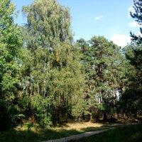 В парке, конец сентября :: Ирина - IrVik