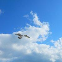 Крымское небо :: Алла Захарова