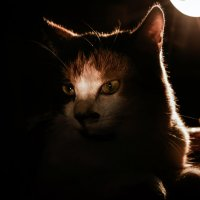 Shadow Animal :: Виталий Шевченко