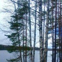 """""""Вдоль по берегу реки вокруг лес растет сосновый, есть березы и дубки"""" :: Ирэн"""